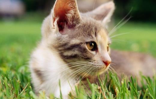 貓咪總會在家門口等主人 你是它的唯一喵生伴侶
