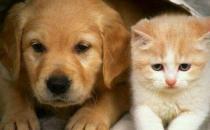 猫未必比狗聪明 猫表示智商测试跟我没关系