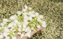 桂花能养精神面生光华  能美容的花卉食谱