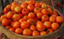 西红柿到底生吃好还是做菜好 西红柿的食用禁忌大全