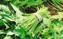 给身体清理垃圾推荐排毒蔬菜 给身体排毒的注意事项