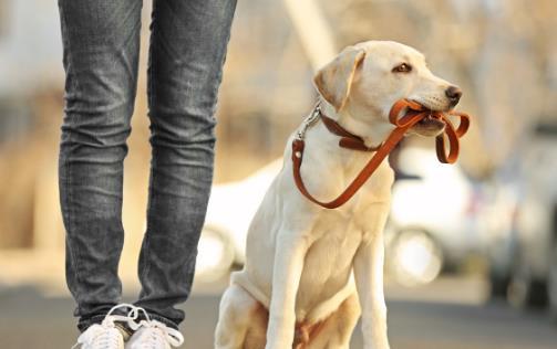 怎样训练狗狗上厕所?训练狗狗定点大小便方法!