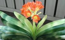 闻花香益健康 可以让人长寿的花卉