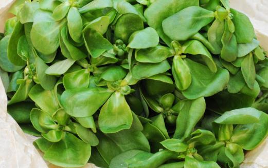 湿气太重皮肤油腻 10种有强效祛湿功效的食物