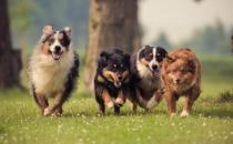 带宠物出国全攻略 携宠离境至少提前一周进行检疫