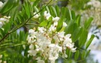 花卉入菜既美味又养生 介绍五款清新的花卉美食