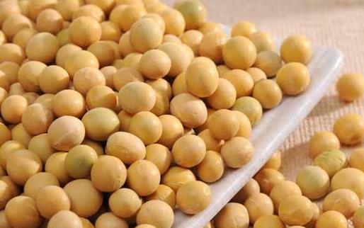 黄豆未各种豆制品的鼻祖 吃黄豆的八大好处