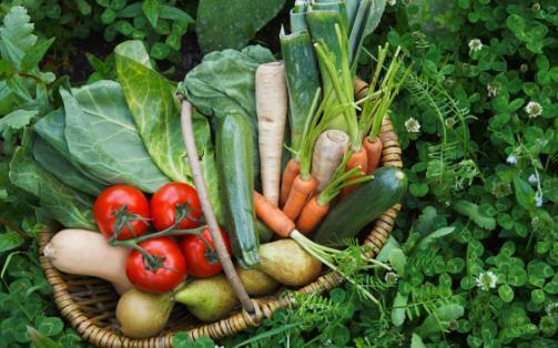 国民蔬果摄入不足 蔬果吃太少对身体的影响大