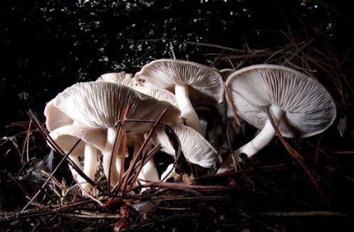 平菇、杏鲍菇、滑子菇…蘑菇这样吃才对味