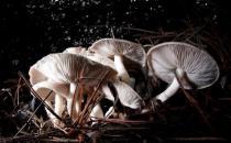 秋天的菌类鲜美至极 教你不同的菌类不同的做法