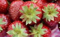 草莓的哪些功效对老人养生 老人吃水果3大原则