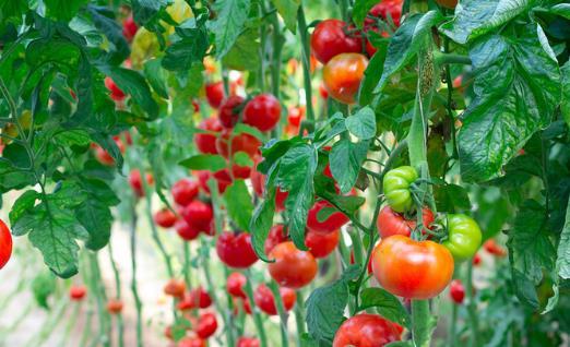 被列入黑名单的水果 能预防肿瘤发生的6类食物