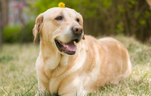 养狗人必知的狗狗呕吐情况 小狗不吃东西还吐怎么办