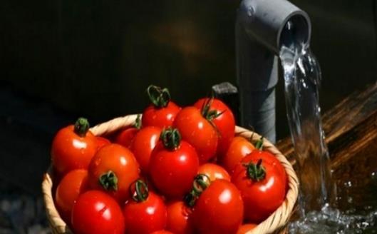 挑选西红柿 告诉你四招识别催熟西红柿