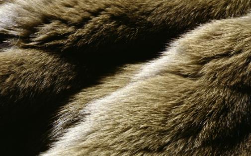 皮草服装成为一种流行趋势 皮草清洗去霉味小妙招