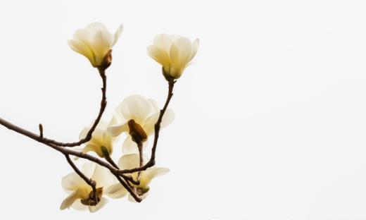 善用鲜花疗百疾 鲜花的食用注意事项