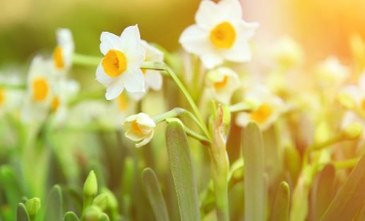 花卉的养殖注意事项 根据家居风水不同养殖不同的花卉