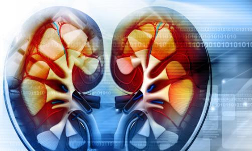 肾功能不好有哪些症状 补肾食品助你摆脱疲劳乏力