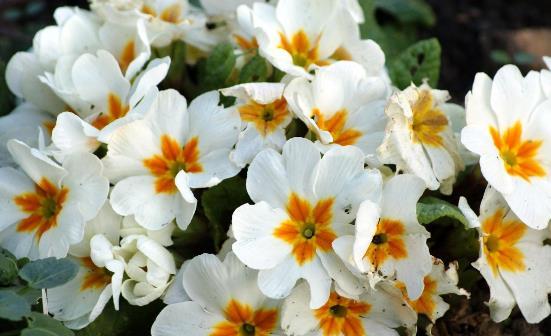 这4类花草养在家里等于不要命