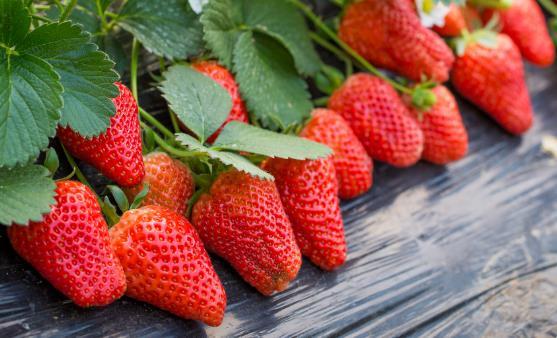 挑选草莓的小窍门 过大过重的草莓不要买