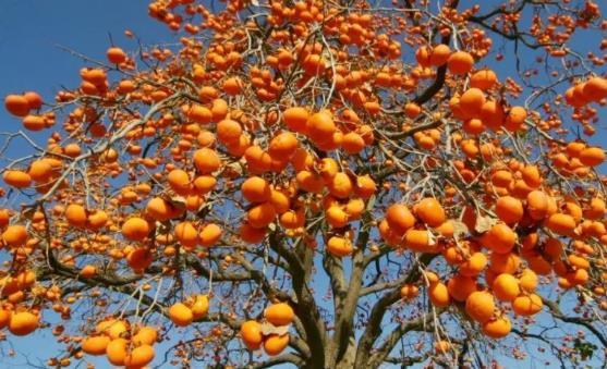 上半年可以吃到的应季水果对人体大有裨益