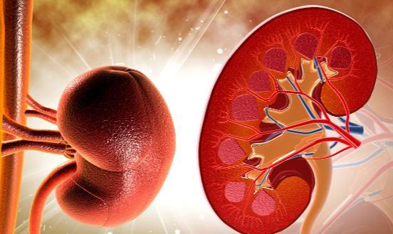 什么习惯会让肾脏提前衰老 如何让你的肾更加健康