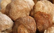 猴头菇有荤中素之称 猴头菇的家常做法