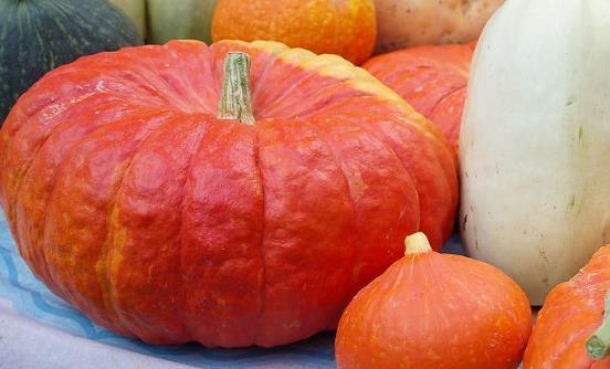 常吃南瓜能防治心血管疾病 南瓜的家常吃法