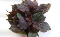 紫苏叶搭配食材有养生效果 推荐十大紫苏叶调理的食谱