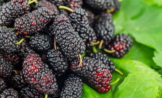20种补血养气的食物 让你拥有好气色。