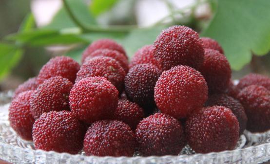 杨梅在水果中有玛瑙的美誉。禁止吃杨梅