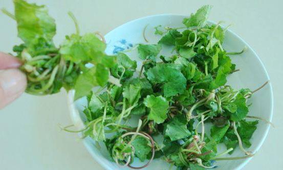 马蹄草的功效作用很多 马蹄草的常见美味吃法