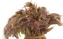 香椿芽的功效与作用 香椿的食用方法