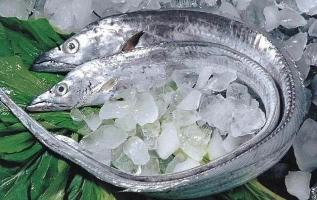 为何带鱼不能人工养殖 带鱼为什么一出水后就会死掉 带鱼是深海鱼吗