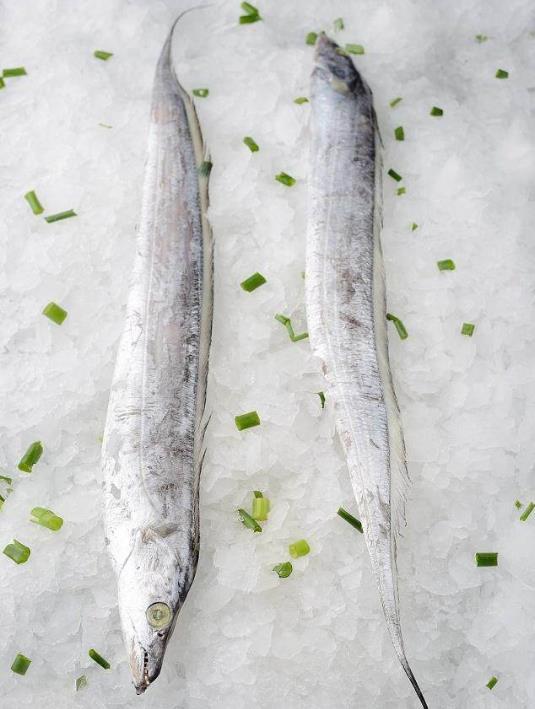 为什么带鱼不能人工养殖?带鱼是深海鱼吗?有什么营养价值