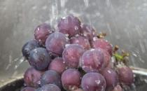 清洗葡萄的小技巧 洗出的葡萄干净好吃